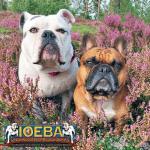 OEB and French Bulldog